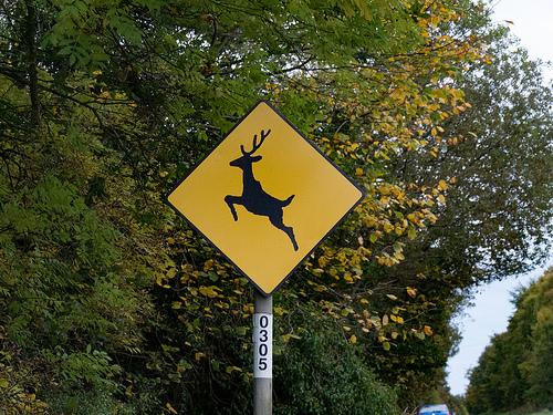 Deer Crossing Caution Sign - Ireland